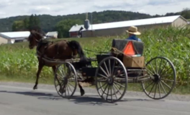 Amish in Action